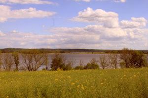 Landschaft am Oberuckersee